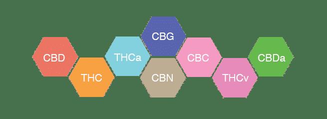 vanliga-cannabinoider-cbd-thc-thca-cbg-cbn-cbc-thcv-cbda
